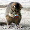 フードビジネス 専門家 研究所 ファインド 札幌 北海道 太田耕平 ブログ 口コミ クチコミ